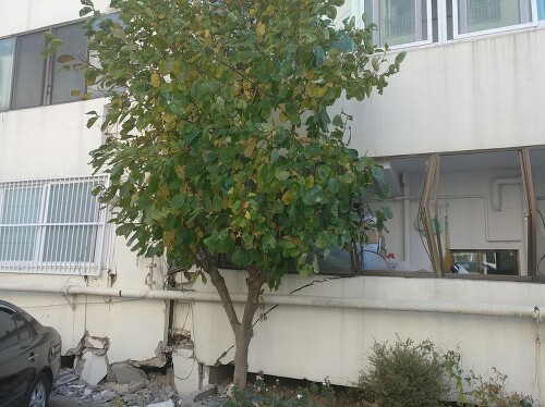 포항 지진 피해 상황