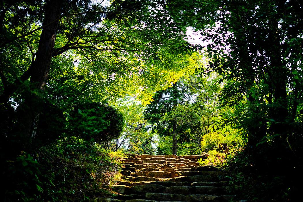 토요일의 짧은 산책170617_남해편백자연휴양림 1