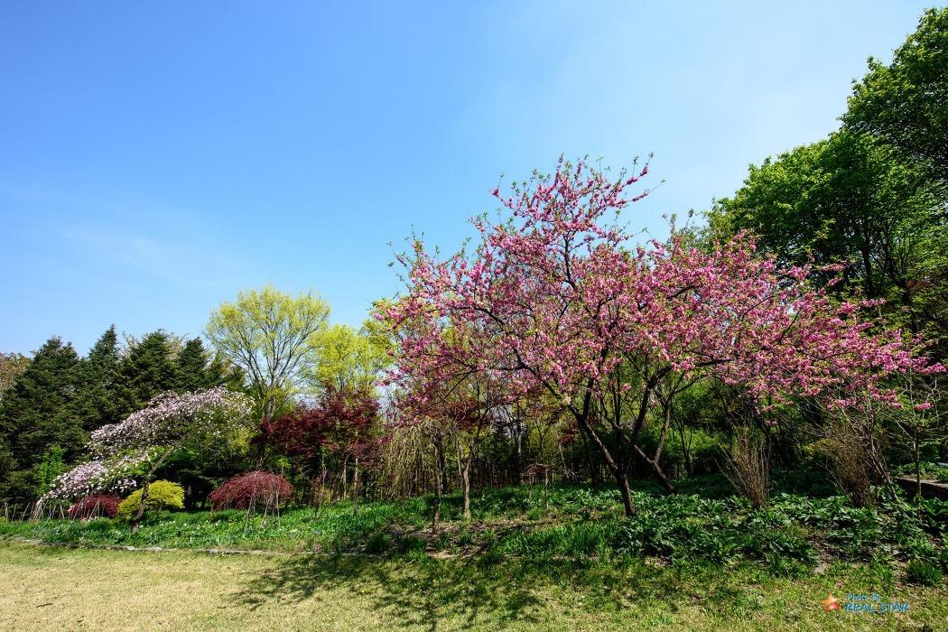 한택식물원의 봄