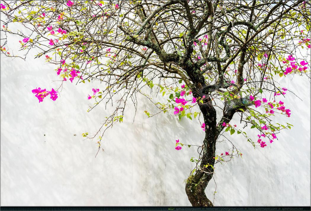 베트남 (11) - 꽃