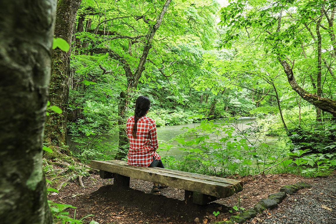 [아오모리] 원령공주의 숲 오이라세계류 이끼산책
