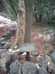 2012년 1월 제주도 정복기] 천년의 숲 비자림!! 동료가 생긴 날~! 12탄)