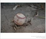 계룡대 야구장