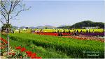 봄 여행 가 볼만한 곳 아름다운 낙동강변 남지