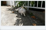 길거리에서 만남 고양이!!