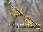2017년 봄 식재료 총정리1탄 (초봄 편)