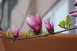 아파트 화단에 찾아온 반가운 봄 풍경