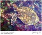 [적묘의 갈라파고스]이사벨라섬,로스투널레스,Los Tuneles,펭귄,상어,해마,거북,스노클링