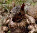 CBS 김길우의 건강상식; 나이가 들면 화려한 겉근육 보다는 속근육을 키워야 합니다(380; 04.15).