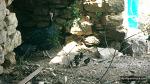 칠면조가 품은 귀여운 병아리