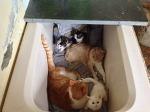 휘파밤에 반응하는 아기고양이들