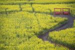 김해 대저생태공원과 양산의 유채꽃 그리고 튤립들