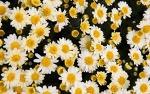 태안가을꽃축제와 고양가을꽃축제에서 화려한 가을꽃을 만나자