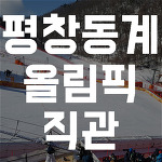 평창동계올림픽 알파인스키 경기장 직관(+북한 응원단 영상)