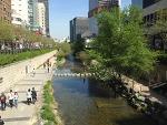 서울 청개천에는 봄을 지나 여름이 오고 있어요