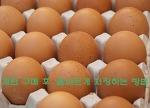계란 구매 후, 올바르게 저장하는 방법