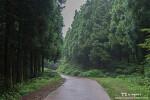 제주 사려니숲길, 비가 와서 더 좋아! 산수국 가득한 숲길