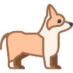 반려동물 강아지 홍시 먹어도 되나? 안 되나? 홍시의 효능