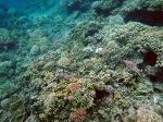 필리핀, 민도로섬(Puerto Galera)에서의 스노클링(Snorkeling)