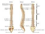 척추측만증 교정병원, 대처가 중요한 이유