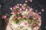 선동 산책길 농원에서 담아온 꽃들 With 헬리오스 58mm 렌즈 [Helios  58mm 44-2  f2.0]