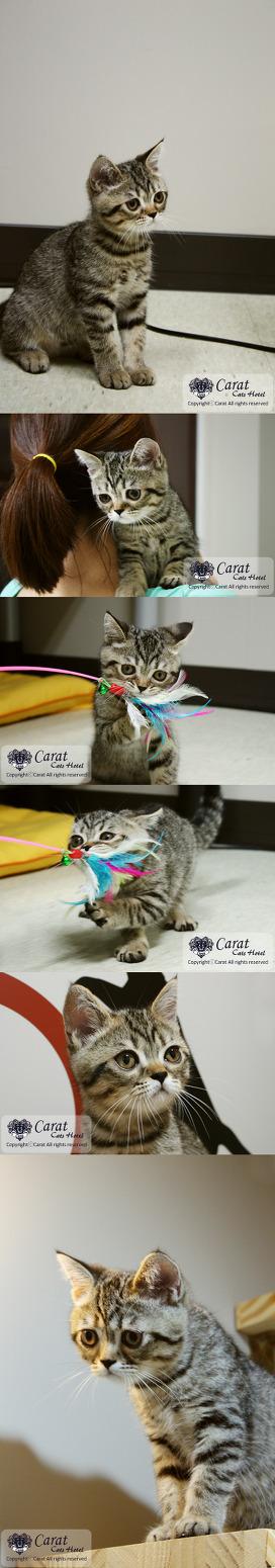[스크랩] 고양이호텔링후기-
