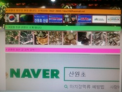 한국산원초산삼협회 공식 블로그 개편 001
