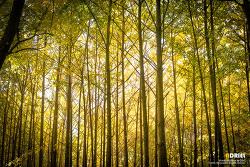 늦가을 서울숲
