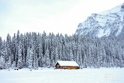 캐나다 밴프국립공원, 설경이 멋진 레이크 루이스 &  말썰매 타고 한바퀴~! Lake Louise Sleigh Rides