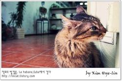 [적묘의 쿠바]도자기 작품 가게의 고양이, 세라믹 아트,Terracota 4,올드 아바나