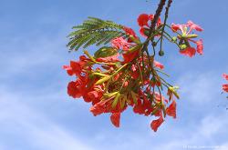 북마리아나제도의 꽃과 이야기