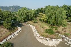 서울숲 바람의 언덕 옆의 생태숲의 바닥이 매말라서 흉물스럽게 갈라져 있었습니다. 한강을 옆에 두고도 이런 모습이라니