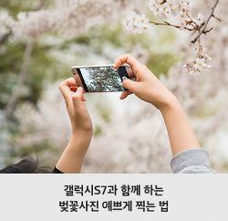 [벚꽃사진 꿀TIP] 이 봄을 놓칠 수 없다! 벚꽃사진 잘 찍는 법 대공개!