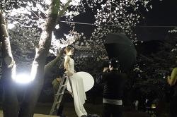 아직은 쌀쌀 하지만 벚꽃은 피었다 안산 벚꽃 구경가자~~~~~