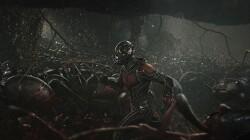 アントマン(Ant-Man)高画質 画像 (4) 6P