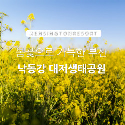 [부산] 낙동강 대저생태공원