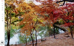 가을 고궁 - 창경궁에서 #2