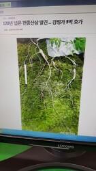 산원초 산삼감정 의뢰 기록 사진