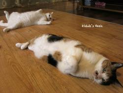고양이와 보일러의 상관관계