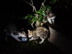 거리의 고양이 9/Cats in the street 9-아파트단지의 길냥이(1)