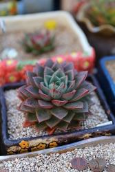집에서 키우기 쉬운 식물 다육