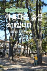 [카드뉴스] 아름다운 숲을 소개합니다_도시숲, 학교숲 이야기
