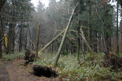 절물자연휴양림 뿌리가 들린 나무