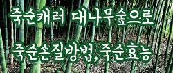 봄철음식 죽순! 죽순캐러 대나무숲으로~ 죽순손질방법,죽순효능