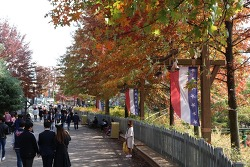 짧지만 인상 깊었던 에버랜드의 가을 풍경!
