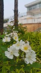 나는 무슨 꽃일까?