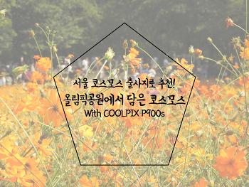 [떠나요] 서울 코스모스 출사지로 추천! 올림픽공원에서 담은 황하코스모스 With COOLPIX P900s