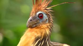 생명 40억년의 비밀2 - 깃털 이야기