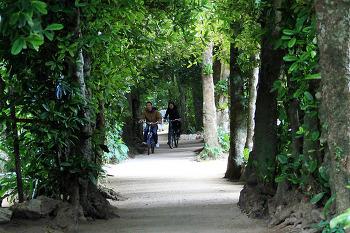 [오키나와여행 18] 비세마을 후쿠기 가로수길, 산책하기 좋은 길
