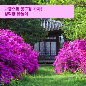 고궁으로 꽃구경 가자! 창덕궁 꽃놀이